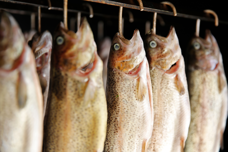 Fische an Hakend hängend werden geräuchert
