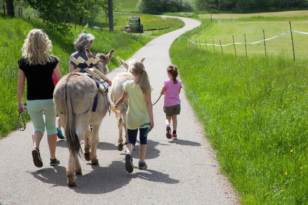 Wanderung mit Eseln und Kindern in Steinen