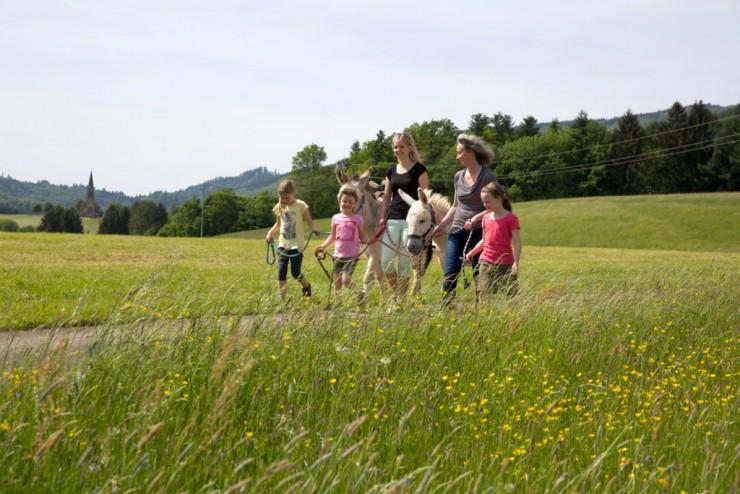 Wanderung mit Kindern und Eseln in Steinen