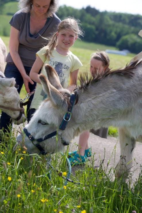 Esel im Portrait mit Kindern