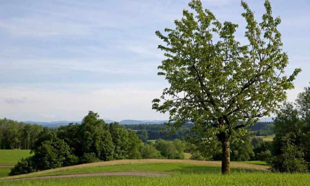 Baum mit Landschaft zwischen Hasel und Kürnberg Biosphärengebiet