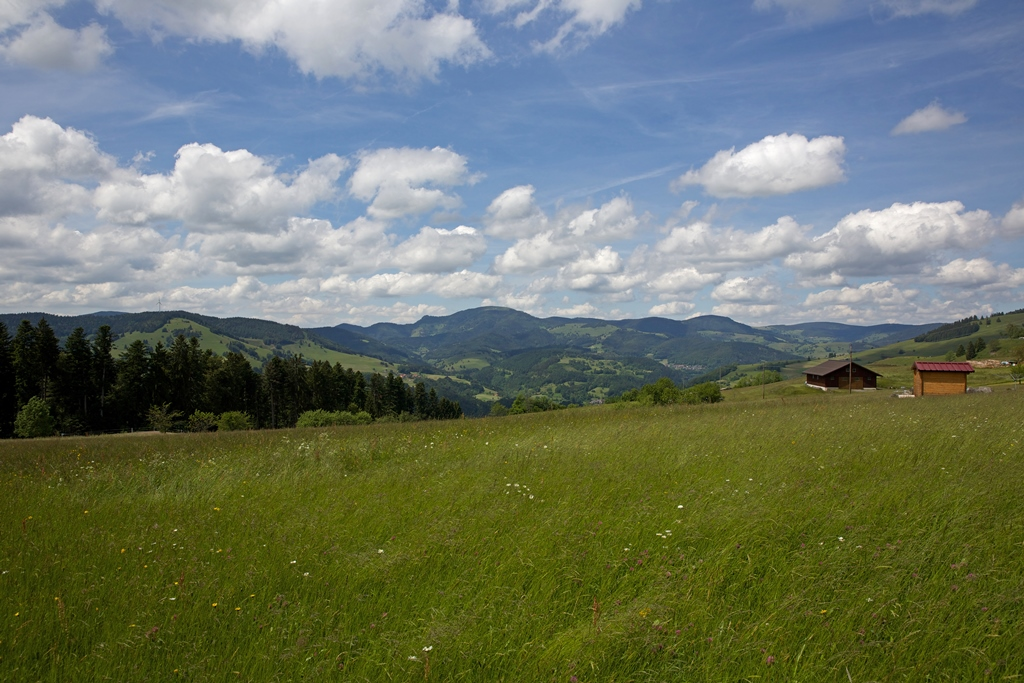 Blick in die blühende Landschaft
