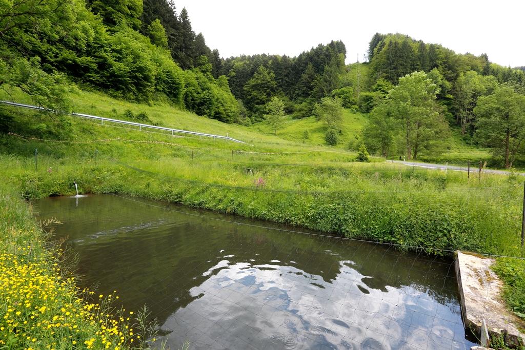Forellenteich der Räuchertonne in Zell-Atzenbach