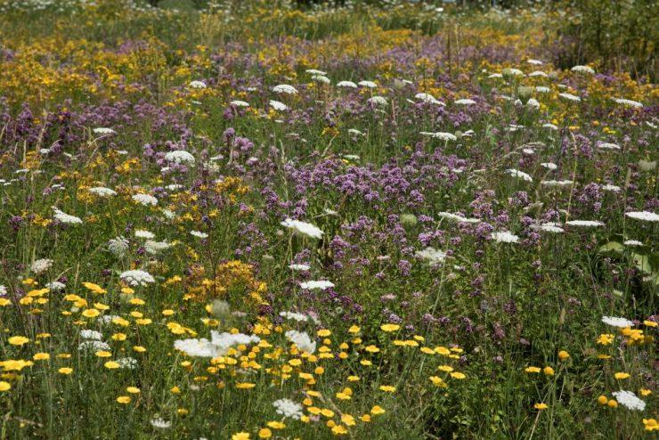 Bienenweide, nur Blueten, gelb, weiss, violettKOMPRIMIERT