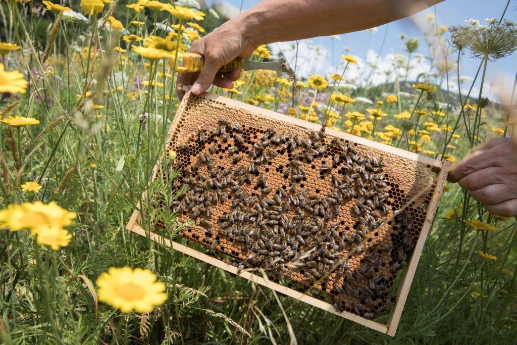 Bienen und Wildbienen - SÜDWÄRTS TOURIST INFORMATION
